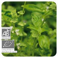 Basilicum Exotische - Ocimum basilicum bio - 10 ml