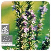 Rozemarijn verbenon - Rosmarinus officinalis CT Verbenon BIO - 5 ml