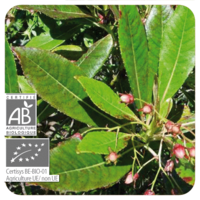 Rozenhout - Aniba rosaeodora var. amazonica  BIO - 10 ml