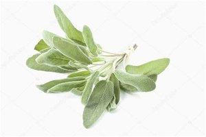 Salie - Salvia officinalis - 10 ml