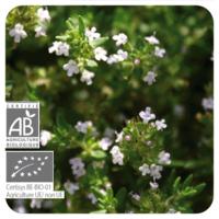 Tijm satureja - Thymus satureioides - 10 ml