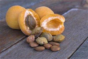 Abrikozenpitolie - Prunus armeciaca - BIO