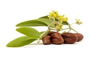 Jojoba olie - Simmondsia chinensis - BIO