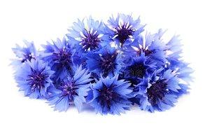 Korenbloem - Centaurea cyanys - BIO