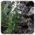 Bergbonenkruid - Satureja montana - 5 ml
