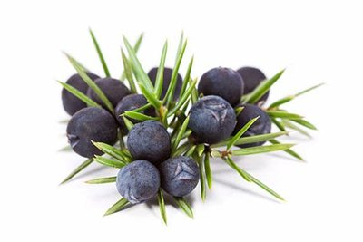 Cade - Juniperus oxycedrus - 5 ml